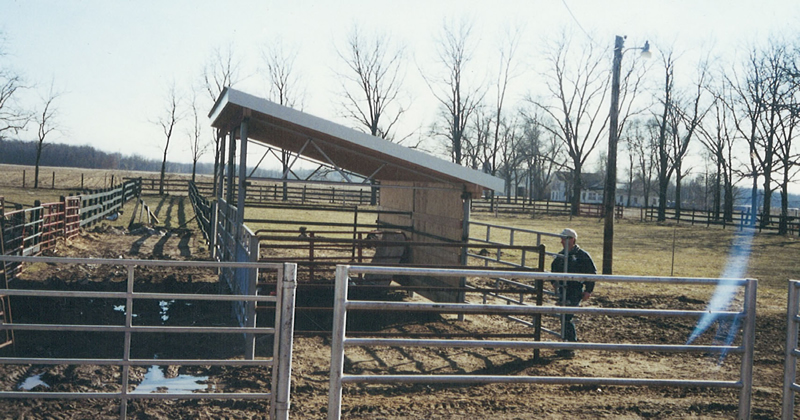 Great Lakes Sire Service pasture