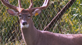 Whitetail Services